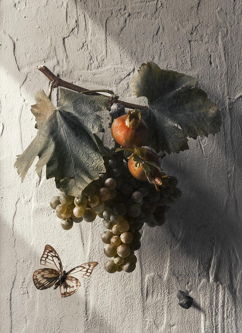 Tristan Dark Still Life Grapes Pomegranate Butterfly Shadows Lights DSC5934