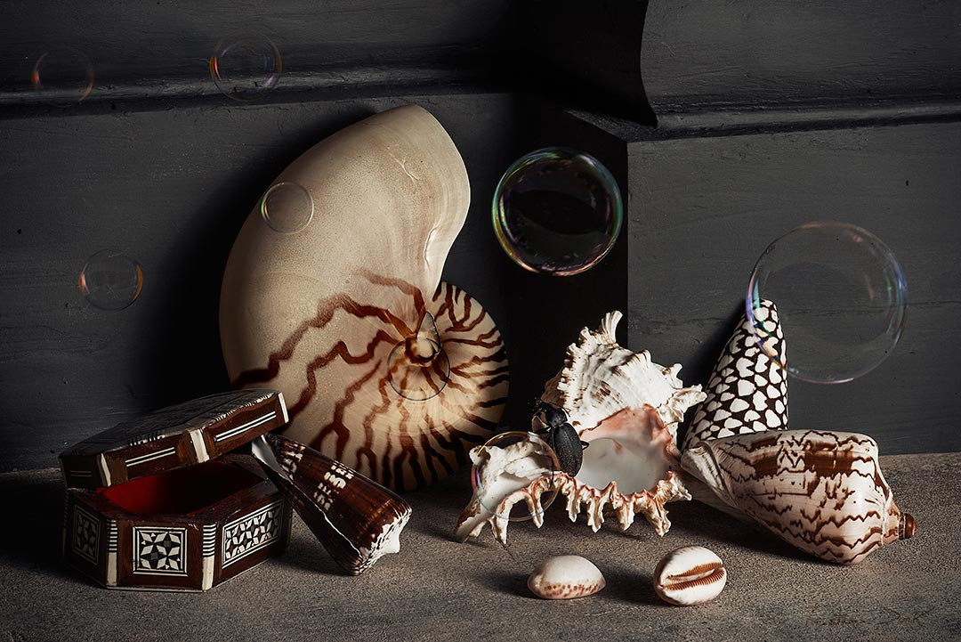 Tristan Dark Vanitas Bubbles Beetle Nautilus Shells Box Painting Photography DSC4722